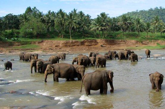 Мечта о Шри-Ланке (4 ночи), 121