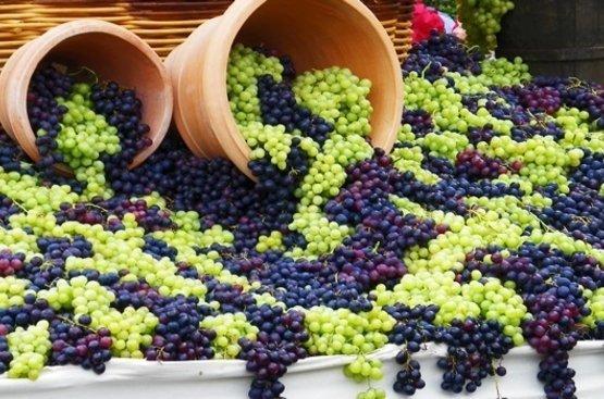 В Грузию на сбор винограда, 112