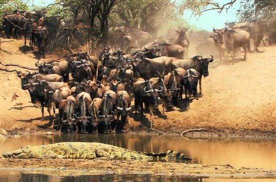 Сафари в Танзании ( 4дн): Тарангире (о Маньяра), Серенгети, Нгоро Нгоро, 115