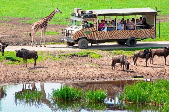 Сафари в Танзании (6 дн) : Тарангире, Кратер Нгоронгоро и Серенгети, 87