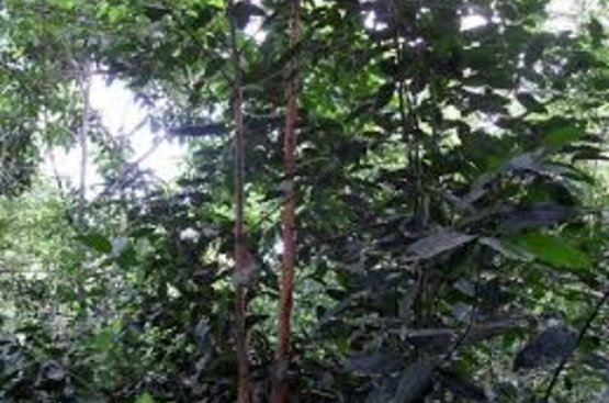 Танзания: Занзибар 7 ночей  + Сафари Селус Парк 3 ночи , 89