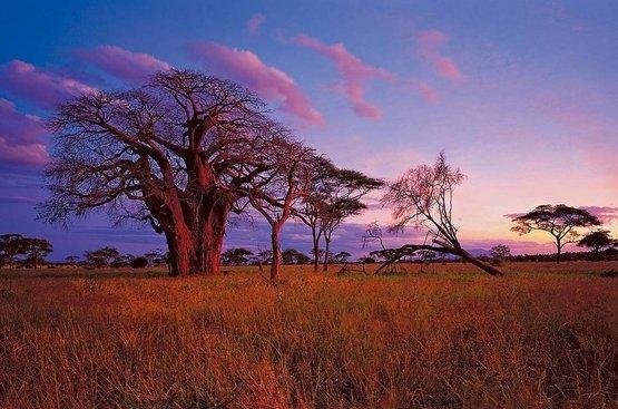 Сафари в Танзании (6 дн) : Тарангире, Кратер Нгоронгоро и Серенгети, 86