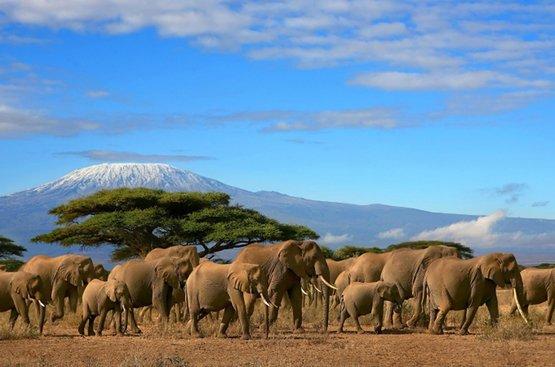 Сафари в Танзании, 124
