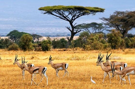Сафари в Танзании, 119