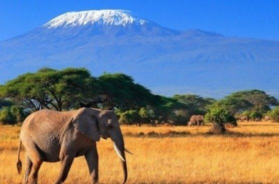Сафари в Танзании, 116