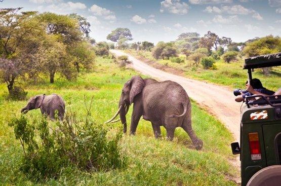 Сафари в Танзании, 114