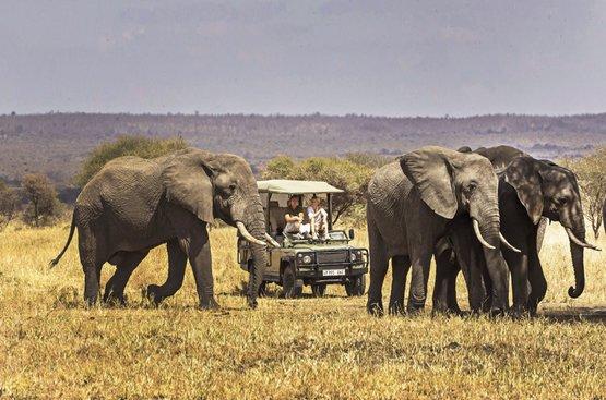 Сафари в Танзании, 117