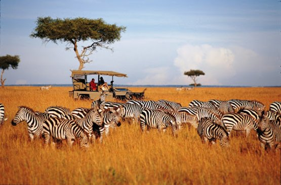 Сафари в Танзании, 115