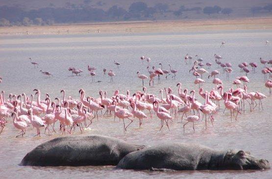 Сафари в Танзании, 122
