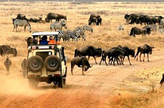 Сафари в Танзании, 123
