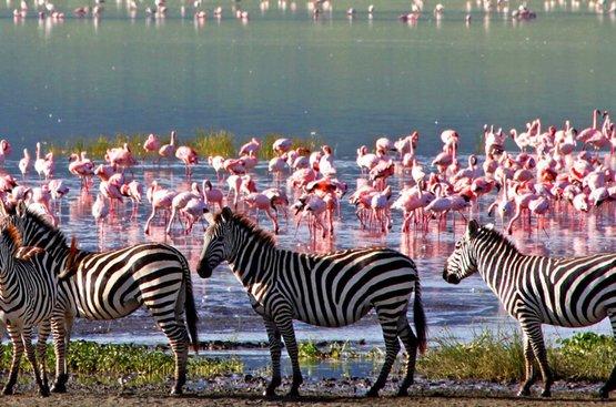 Сафари в Танзании, 120