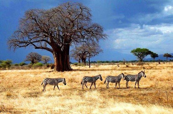 Сафари в Танзании ( 4дн): Тарангире (о Маньяра), Серенгети, Нгоро Нгоро, 113