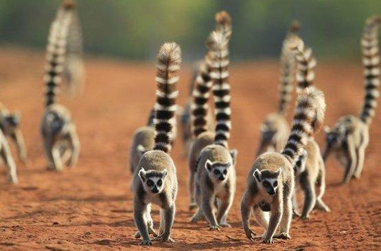 Маврикий + Мадагаскар, 96