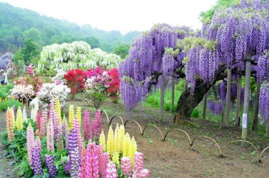 Япония: Майские грезы, 86