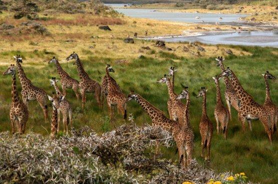 Сафари в Танзании ( 5дн): Тарангире, озеро Эяси и Кратер Нгоронгоро, 89