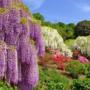 Япония: Майские грезы, 90