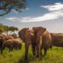 Сафари в Танзании (4 дн): озеро Маньяра и Кратер Нгоронгиро, 92